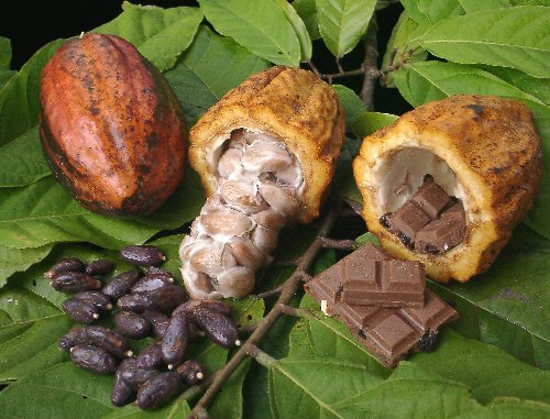 cacao_produces